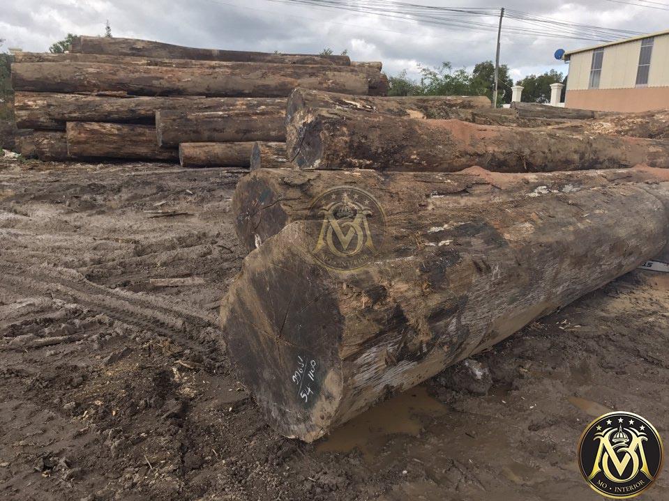 gỗ mahogany