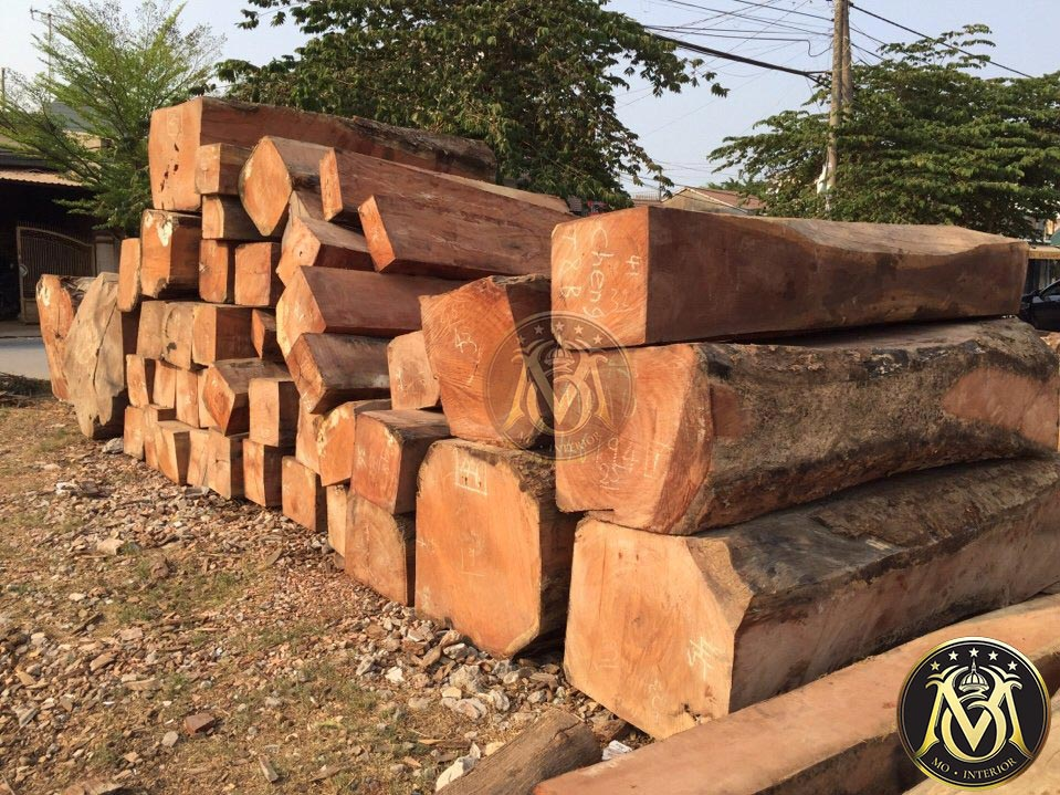 cây gỗ gõ đỏ lào